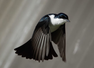 Bird Removal Toronto Services in Hospitals