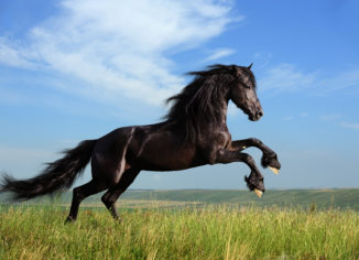 Equestrian Rubber Surfaces Take Lesser Time To Be Washed