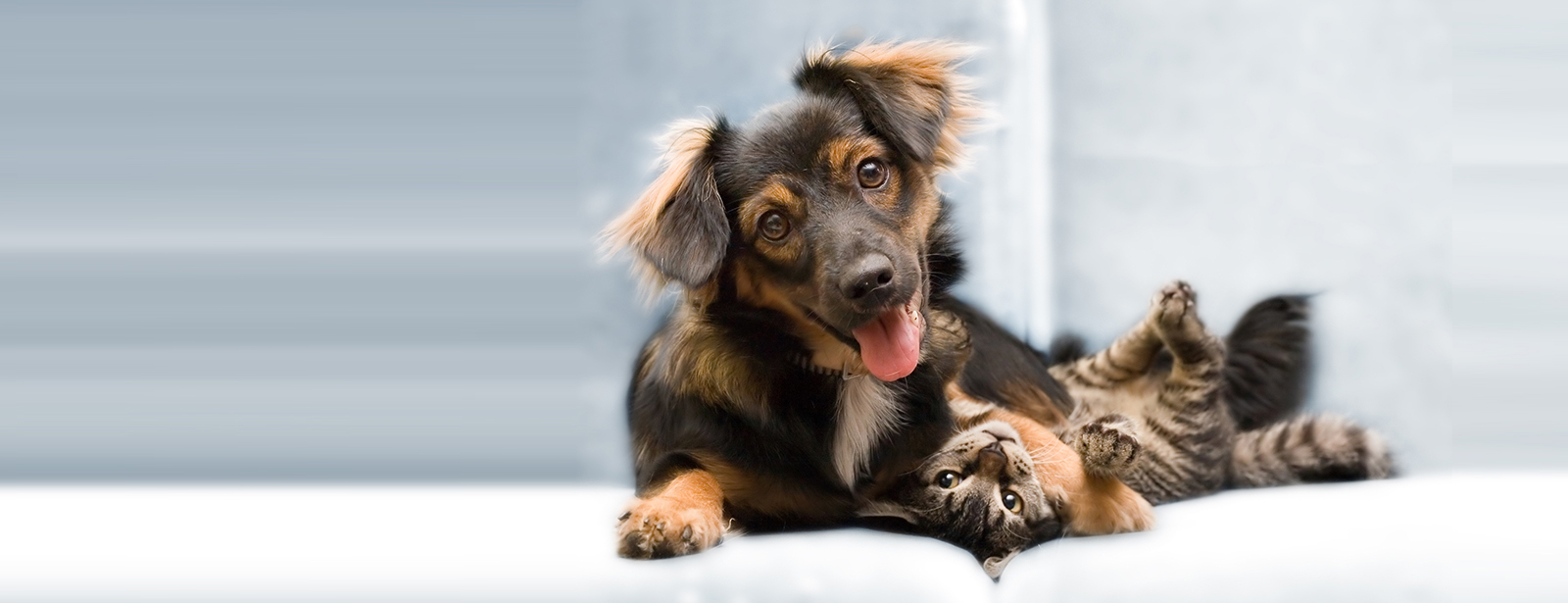 Fun Ways to Celebrate Mother's Day With Your Pet!
