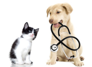 Main Reasons to Spay or Neuter Your Pet
