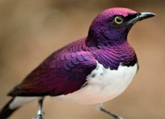 Myths of Bird Feeding