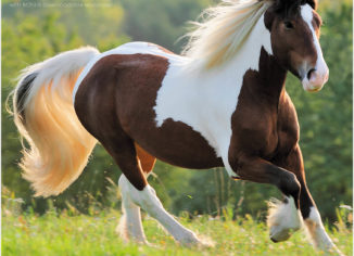 Significant Benefits of Riding Arena Kick System and Horse Exerciser