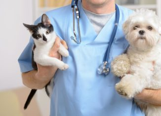 Some Suggestions For Selecting Any Hospital For Your Pet