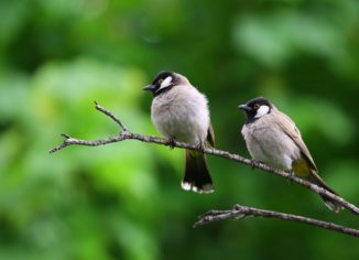 Top 8 Factors to Consider While Buying Bird Food