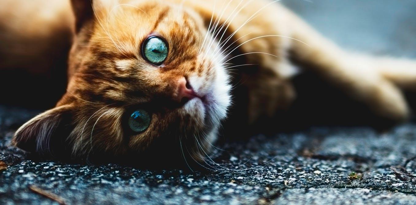 Trainable Cats