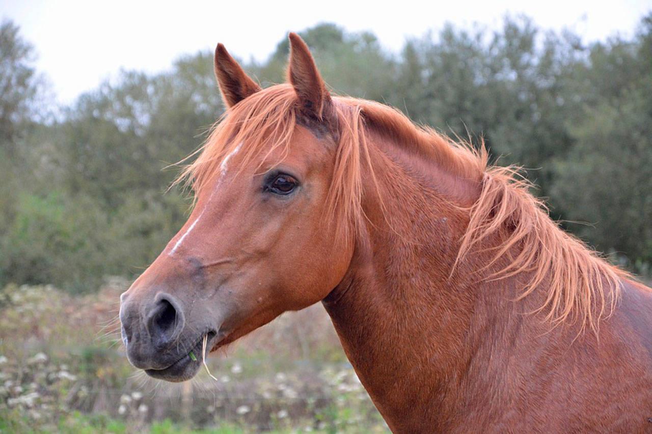 Want to Buy Horse Exercising Training Equipment?