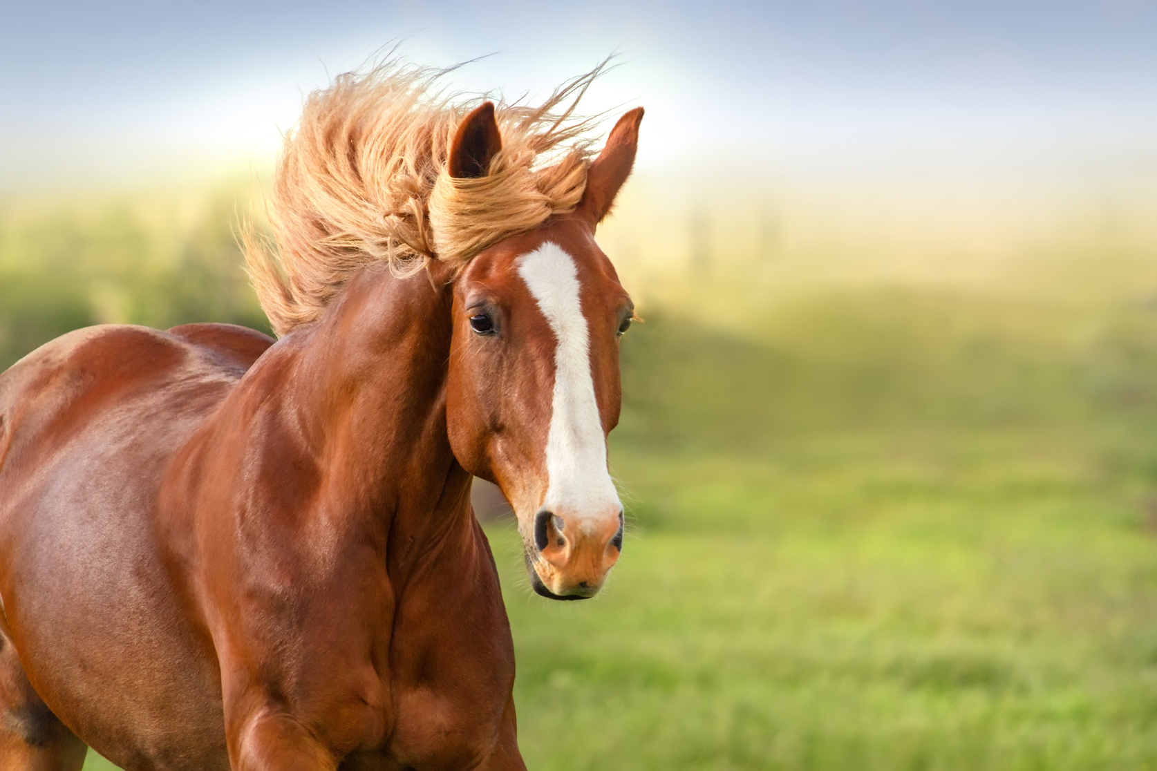 What Exactly You Have To Know About a Horse Exerciser - The Ideal Equipment for Horses