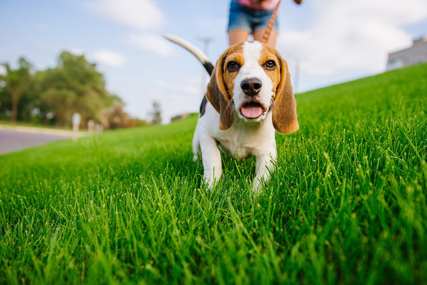What Products You Should Buy For Your Pets?